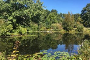 Paramecium Pond: Is the beauty worth the cost?