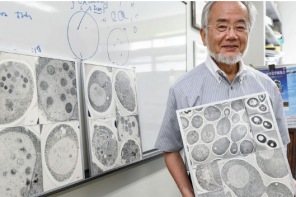 Cell recycling in action: how autophagy won the Nobel Prize