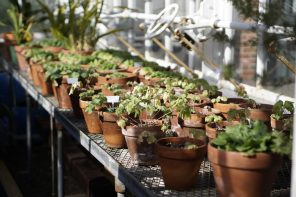 The Botanistas showcases campus plant diversity through collaborative initiatives and events