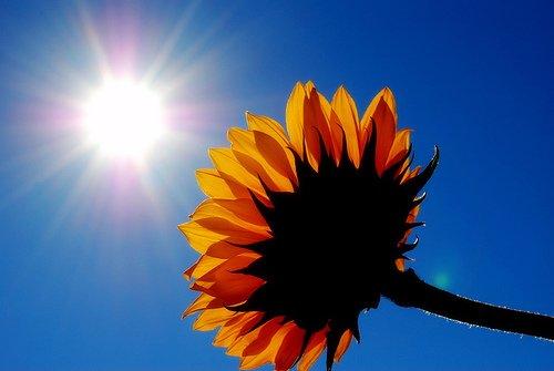 Image result for sunlight
